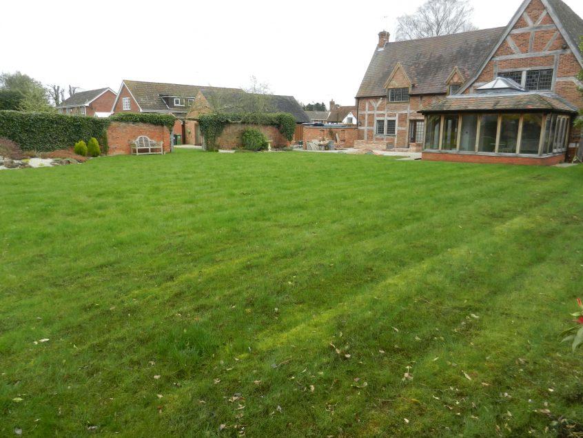 Lawn Renovation BEFORE